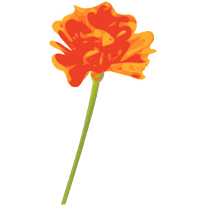 Orange Flower clipart orange things Royalty  fre clip vector