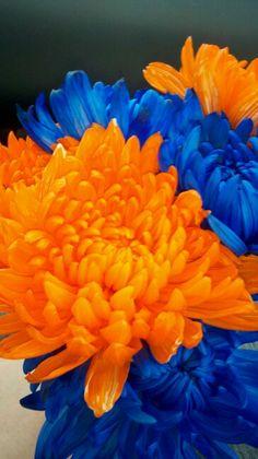 Orange Flower clipart orange things ~~ Rick's Love oranges Blue