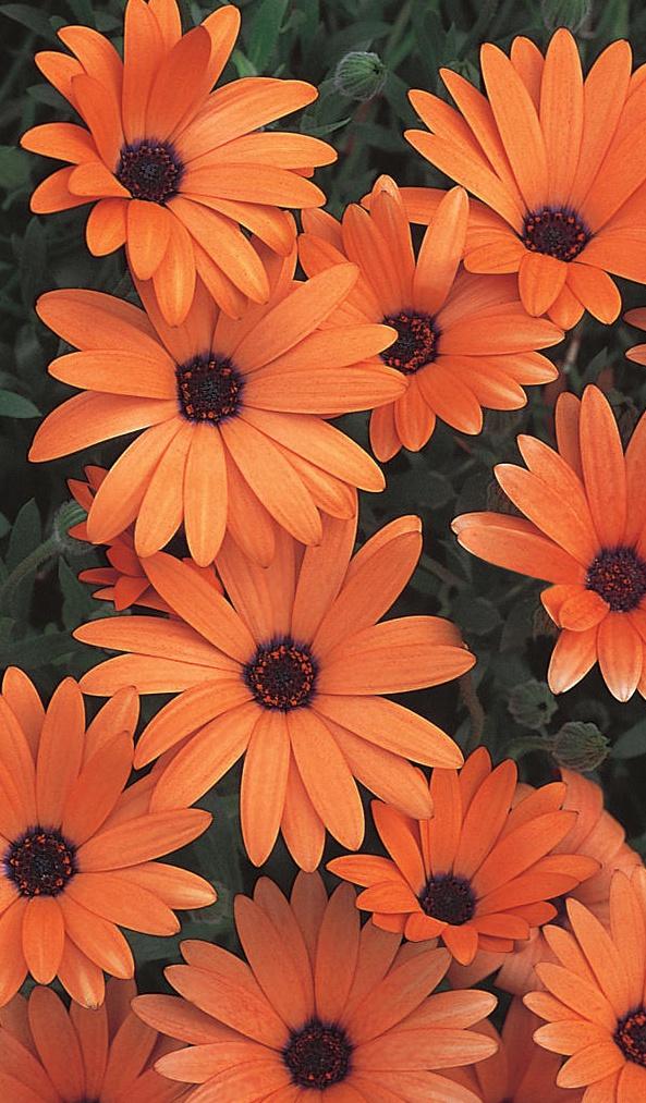 Orange Flower clipart orange things Has bloom with unusual a