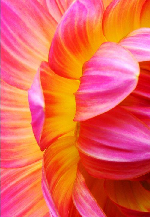 Orange Flower clipart orange things Images NARANJA ♥ more NARANJA