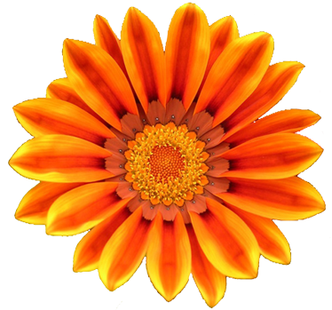 Orange Flower clipart orange things Flowers Clip Clip Orange Free