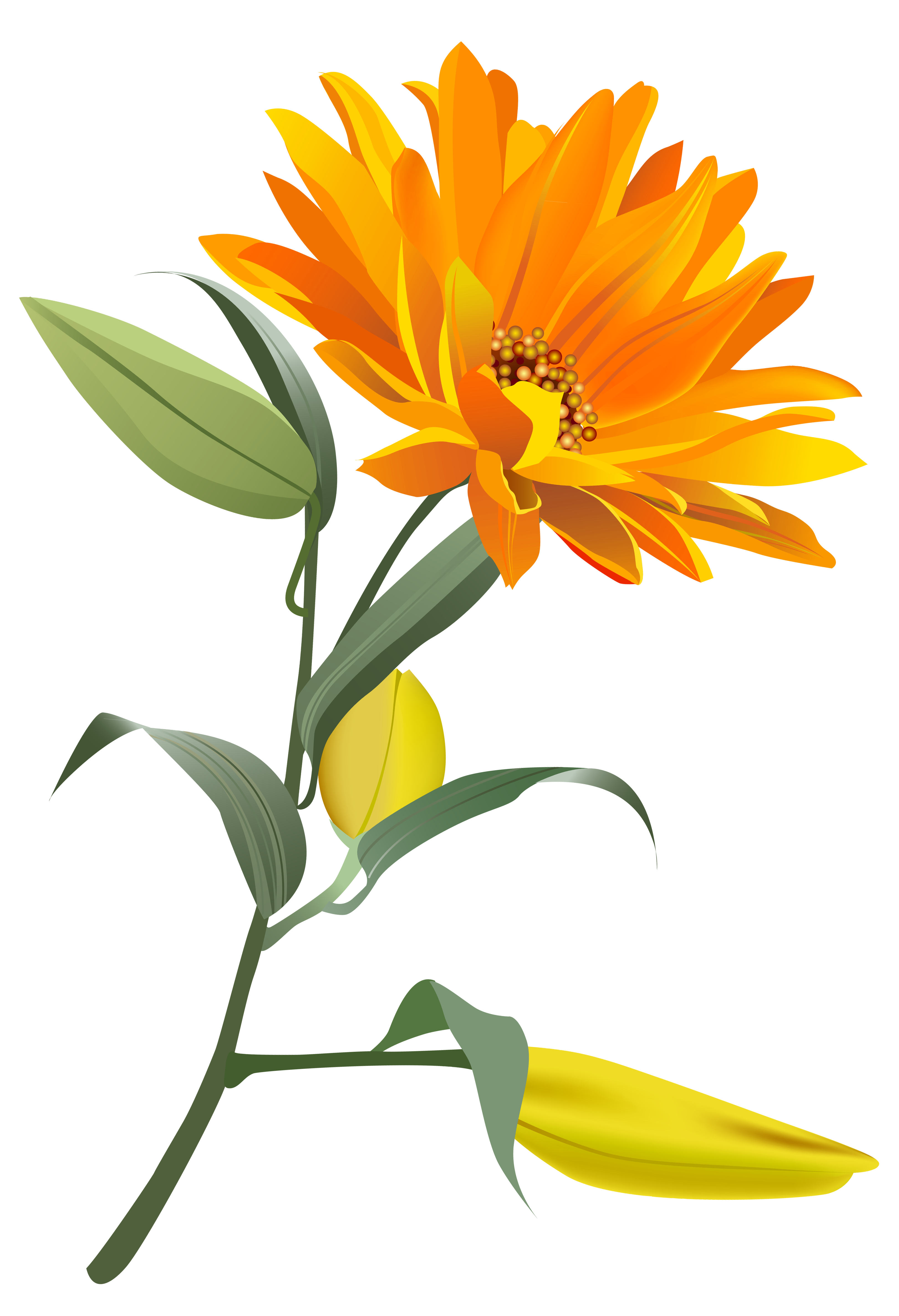 Orange Flower clipart transparent Yopriceville Gallery flowers Image Art