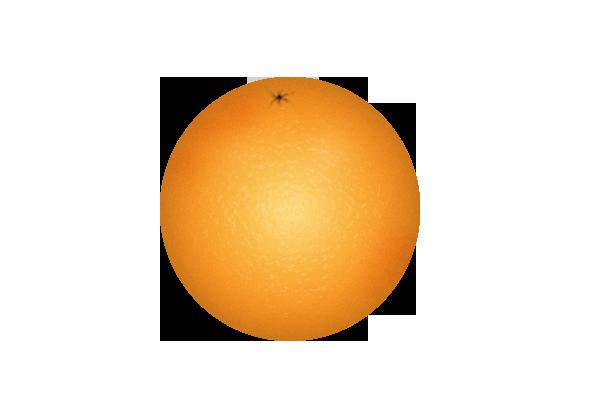 Orange (Fruit) clipart 5 clipart com Orange Orange