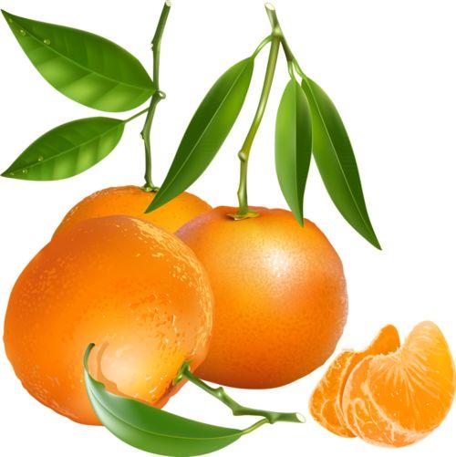 Orange (Fruit) clipart florida Légumes fruits tubes fruits /