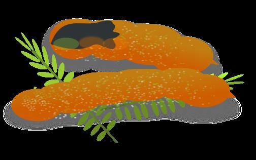 Orange (Fruit) clipart sour food Clip Fruit to Page Fruits