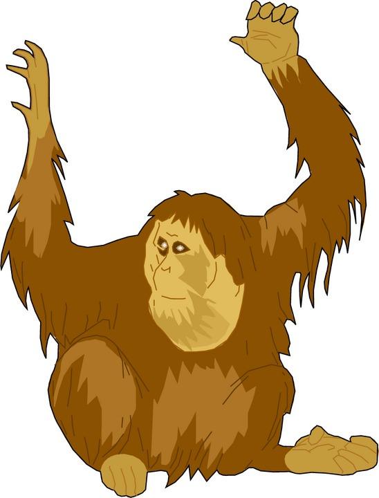 Orangutan clipart Clipart clip #3 art #13