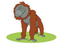 Orangutan clipart Clip 102 Free Kb Clipart