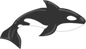 Orca clipart Top 13 Free Clipart Art