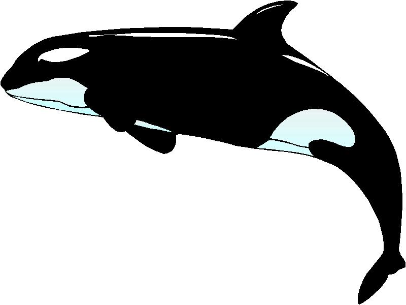 Orca clipart Clip Orca art WikiClipArt art