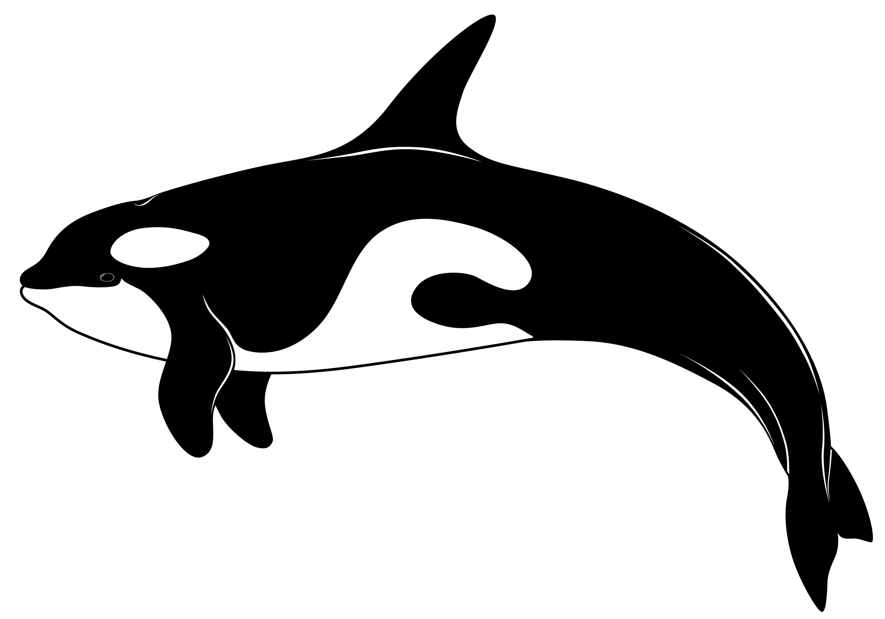 Orca clipart Orca 3 WikiClipArt 2 art