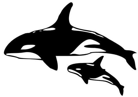 Orca clipart Clipart orca Clipart Orca #68