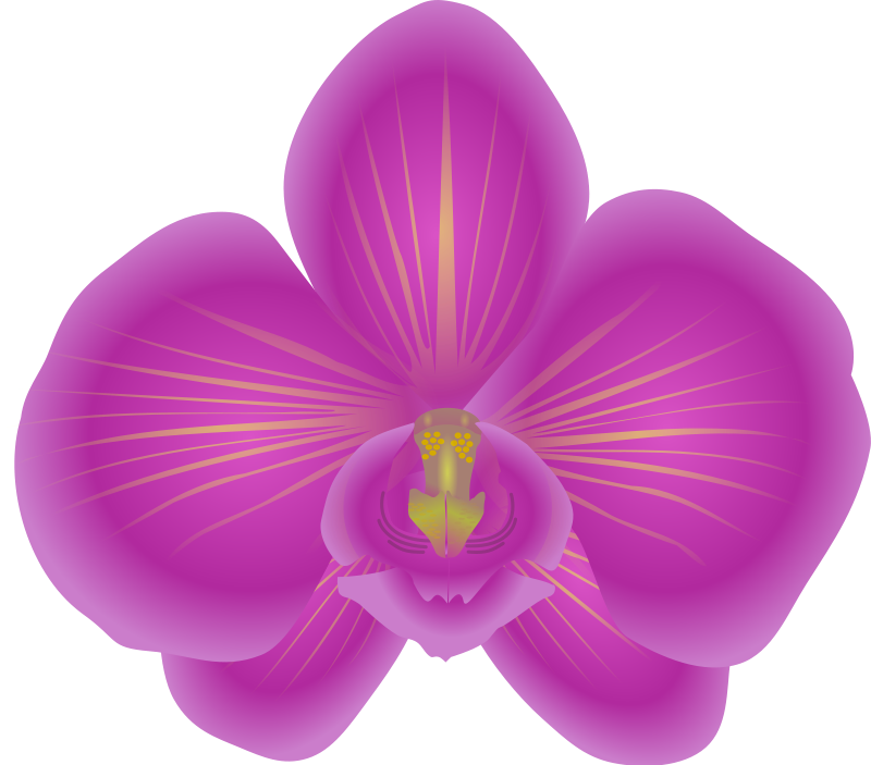 Orchid clipart Flower Use Orchid Orchid Free