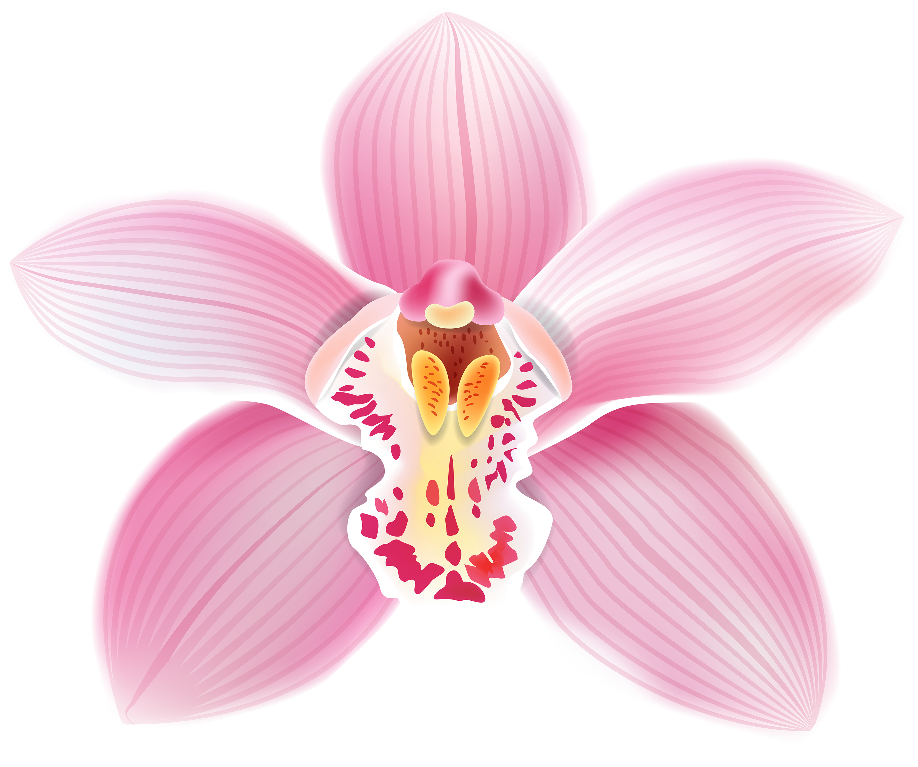 Orchid clipart Orchid Cliparts Cliparts Cliparts Orchid