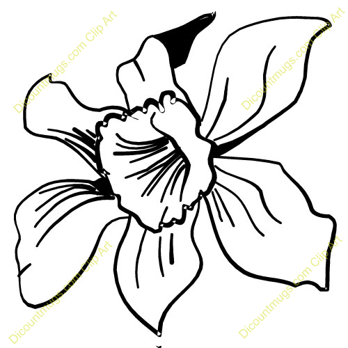 Orchid clipart #10