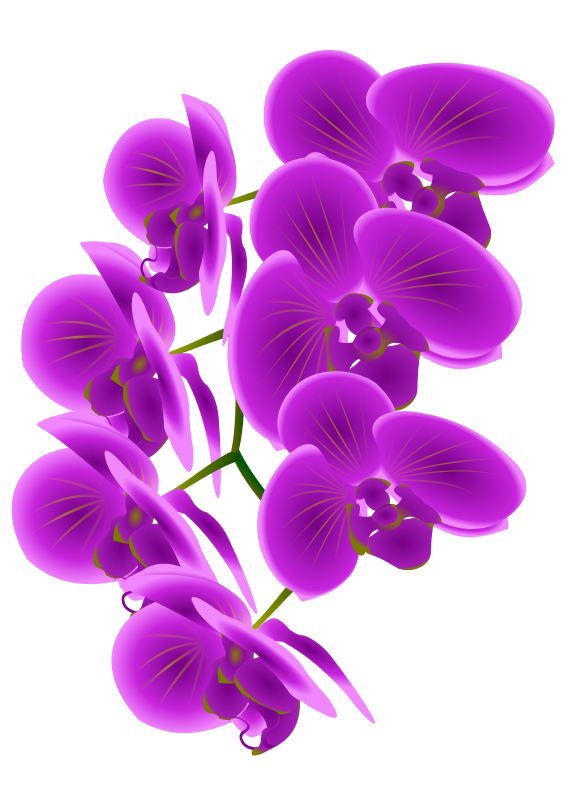 Orchid clipart Orchid to Art Domain Purple