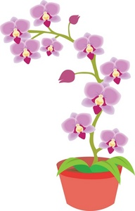 Orchid clipart Orchid Savoronmorehead Clipart Clipart Savoronmorehead
