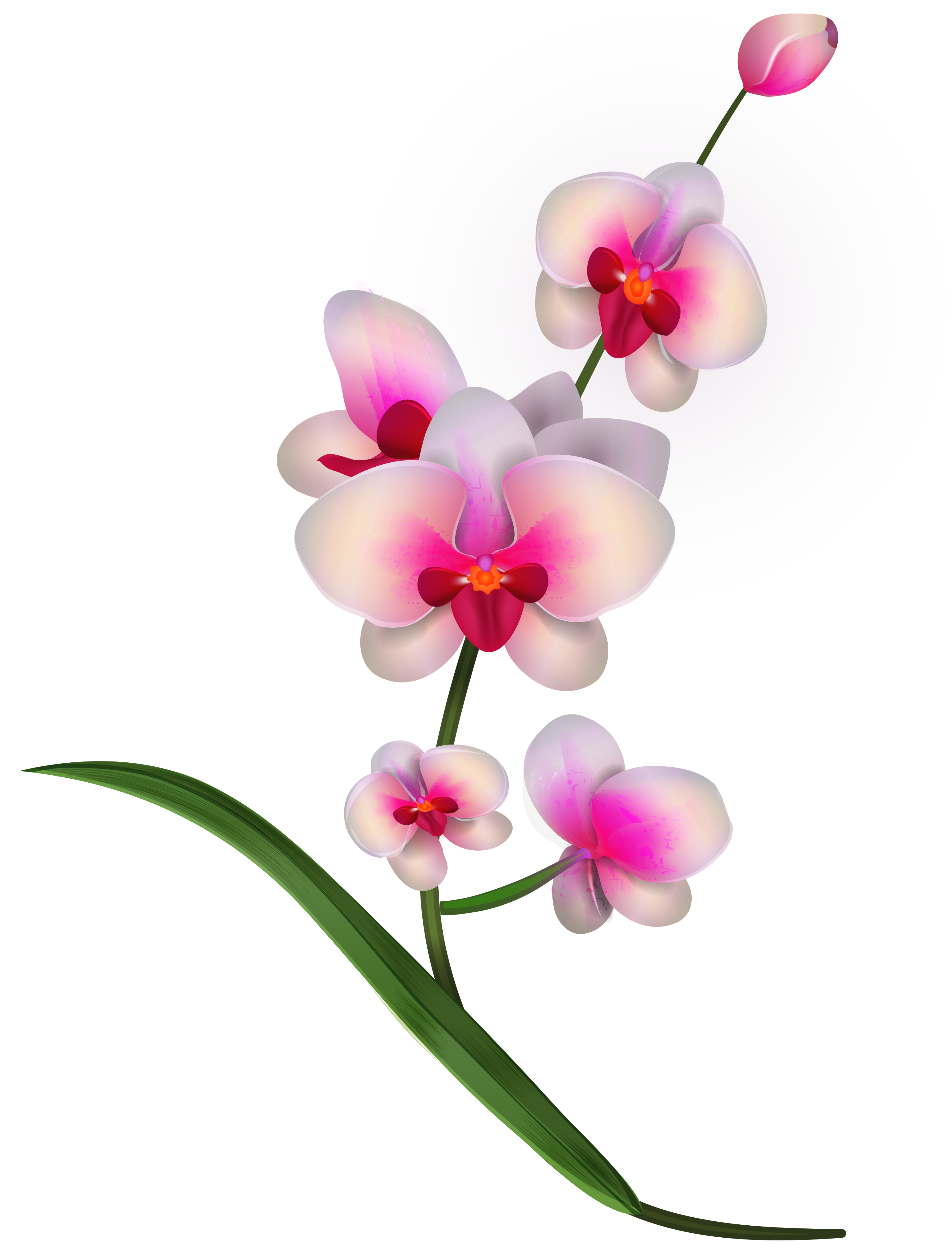 Orchid clipart Yopriceville size Image PNG Quality