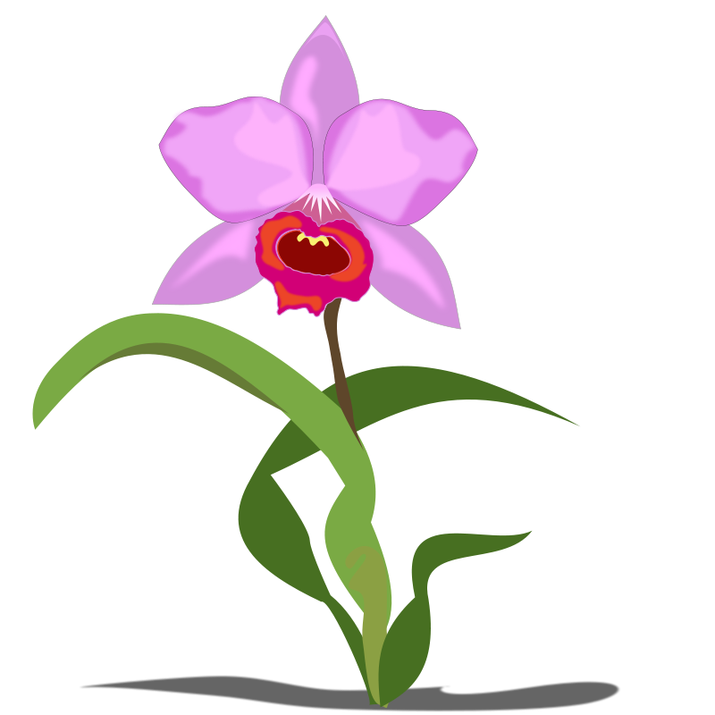 Orchid clipart Flower to Domain Public Art
