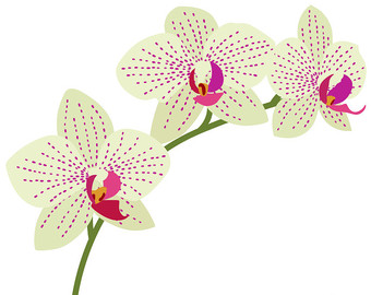 Orchid clipart Etsy Orchids art Clipart Flower