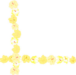 Yellow clipart boarder Art swag Orchid Flower graphic