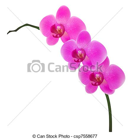 Orchid clipart graphic Vector Illustration isolated  of