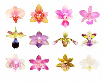 Orchid clipart graphic Flowers Sheet Scrapbook Graphic 'Orchids