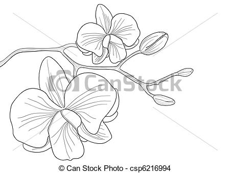 Orchid clipart orchid flower Free illustration flower Flower orchid