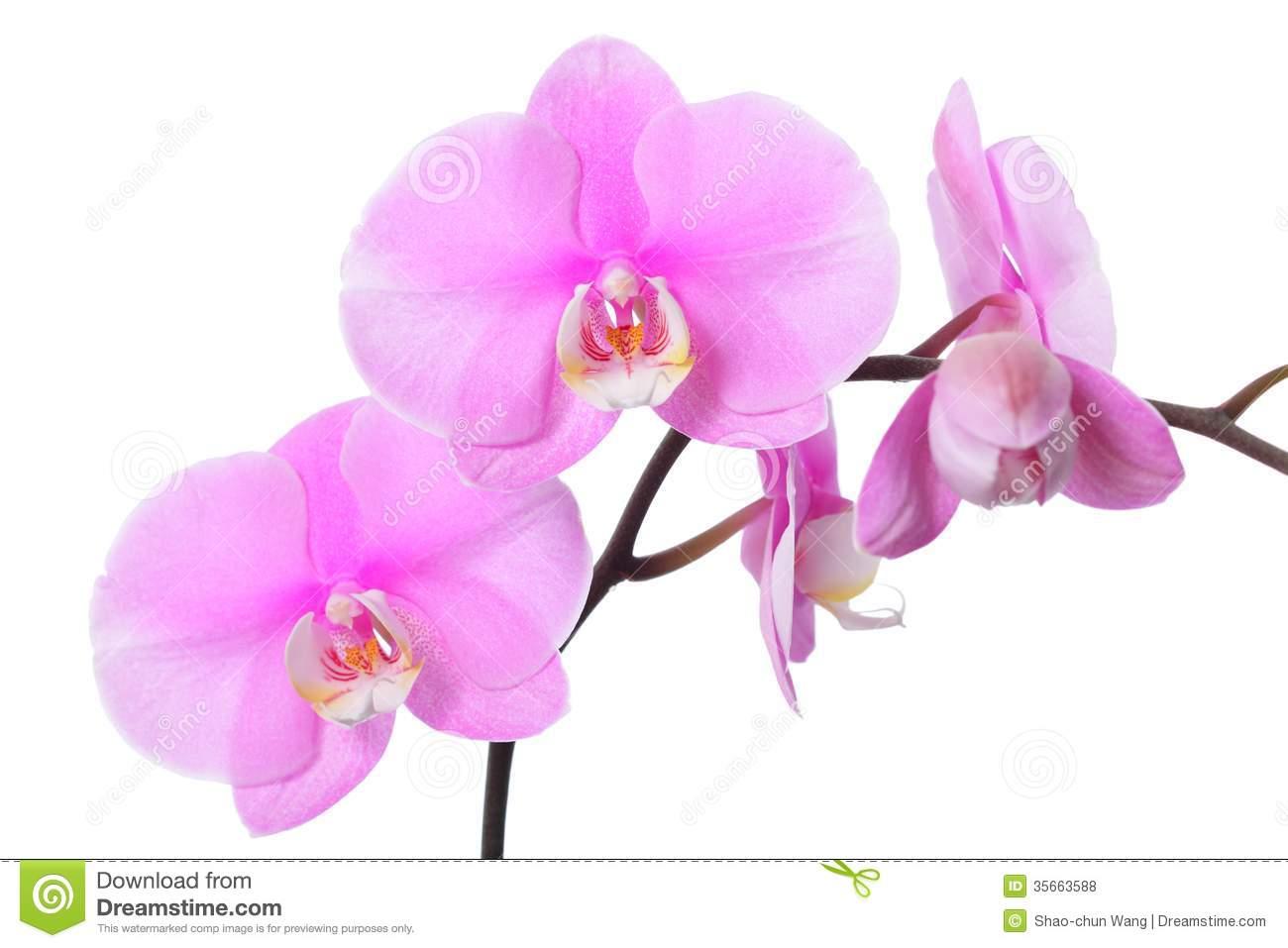 Orchid clipart orchid flower Clip #68 Flower art orchid