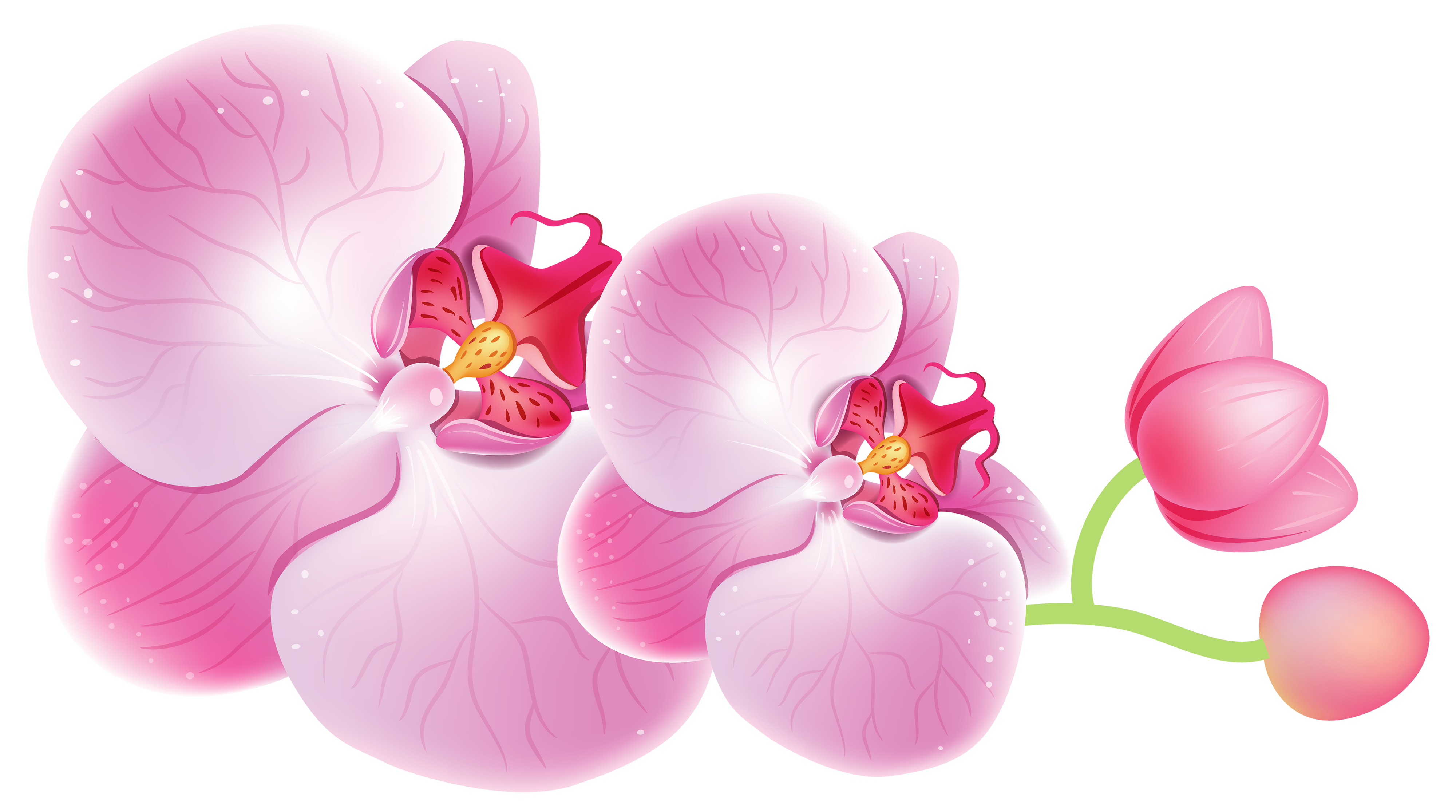 Orchid clipart orchid flower Clipart Orchids Orchid's Orchids Collection
