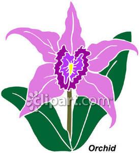 Orchid clipart orchid plant Plant  cattleya cymbidium ·