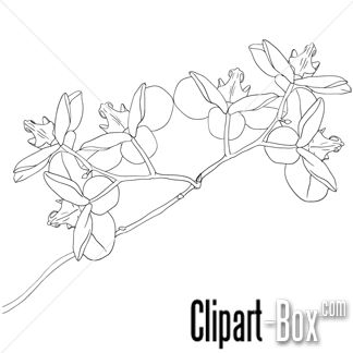 Orchid clipart sketch FLOWERS CLIPART Traceable  STYLE