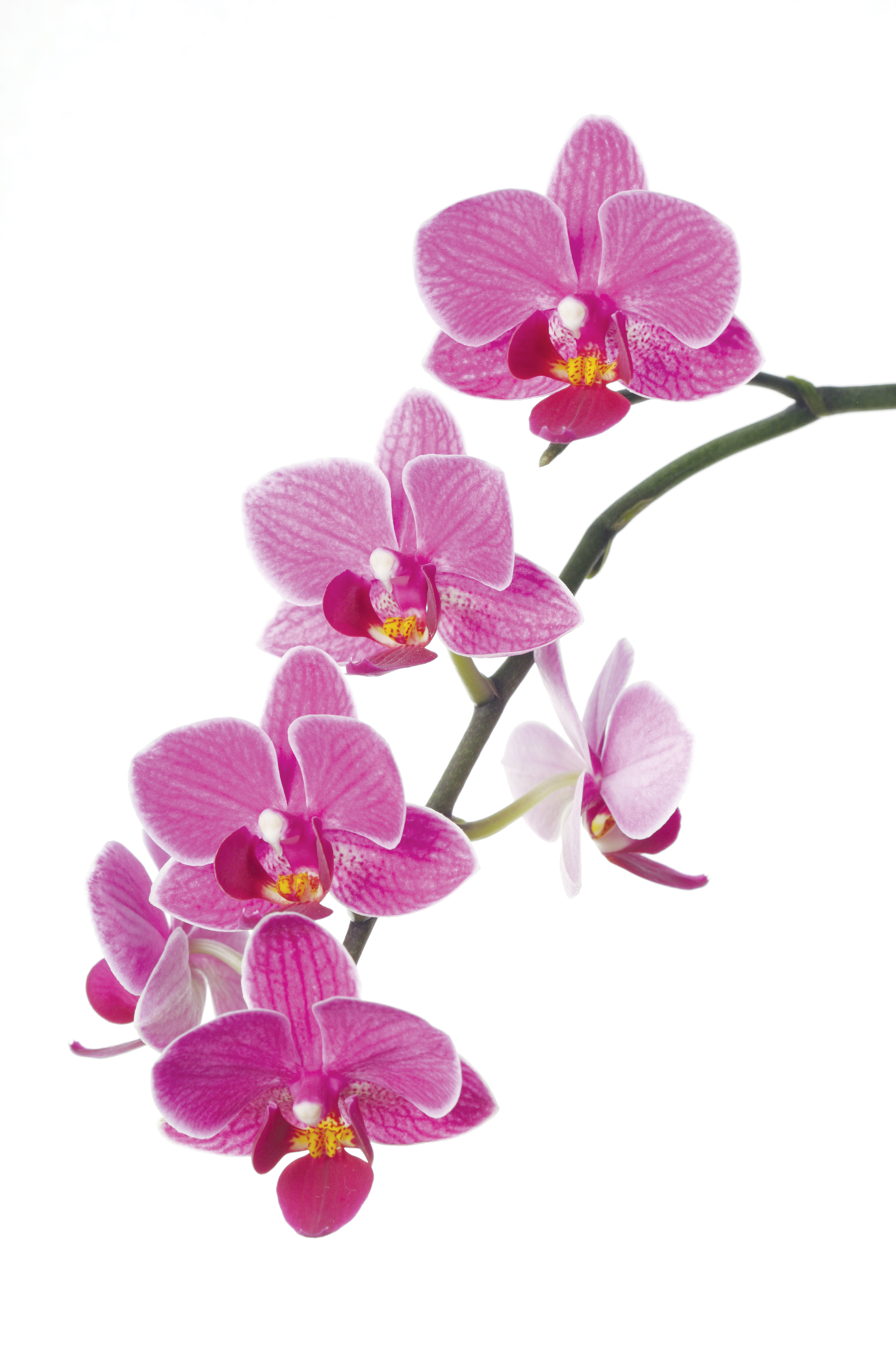 Orchid clipart orchid flower And Clipart Art Sad Little