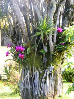 Orchid clipart tree bark  Care Watering Orchid