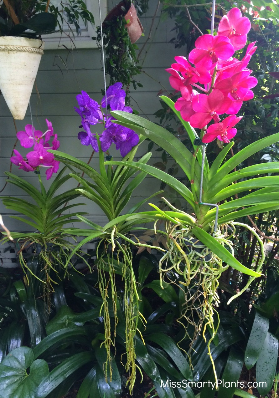 Orchid clipart tree trunk In orchids Vanda tree orchids