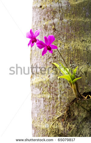 Orchid clipart tree trunk Olgysha trunk via Orchid by