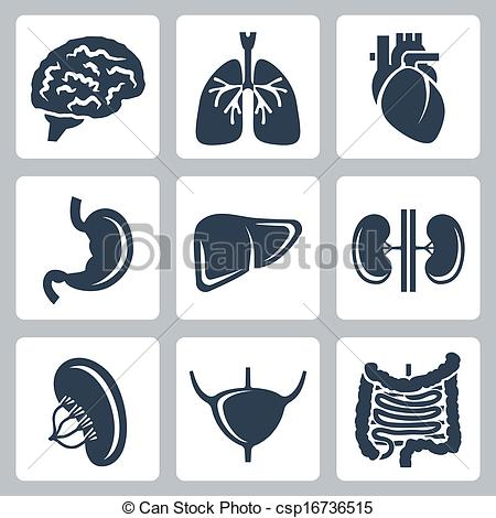 Organs clipart human stomach Free Clipart Images Art Free