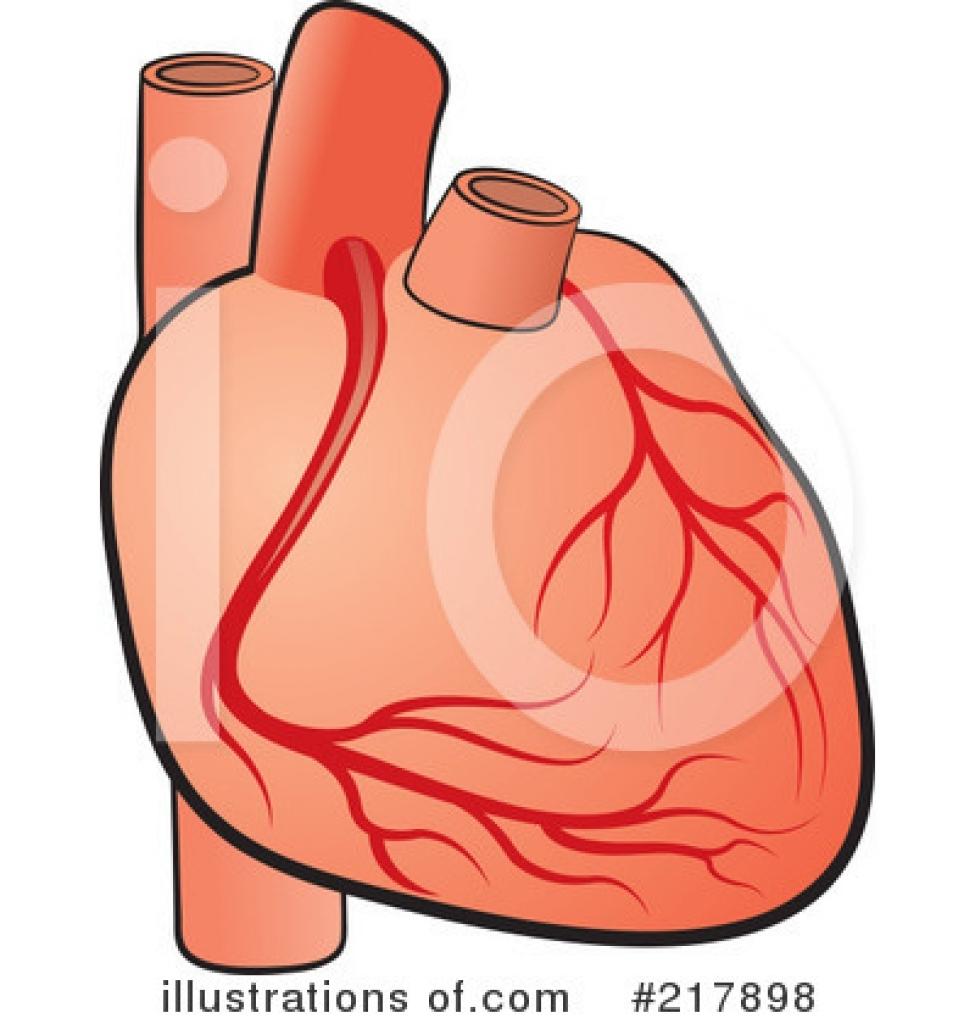 Organs clipart actual heart  Heart Lal Illustration 217898