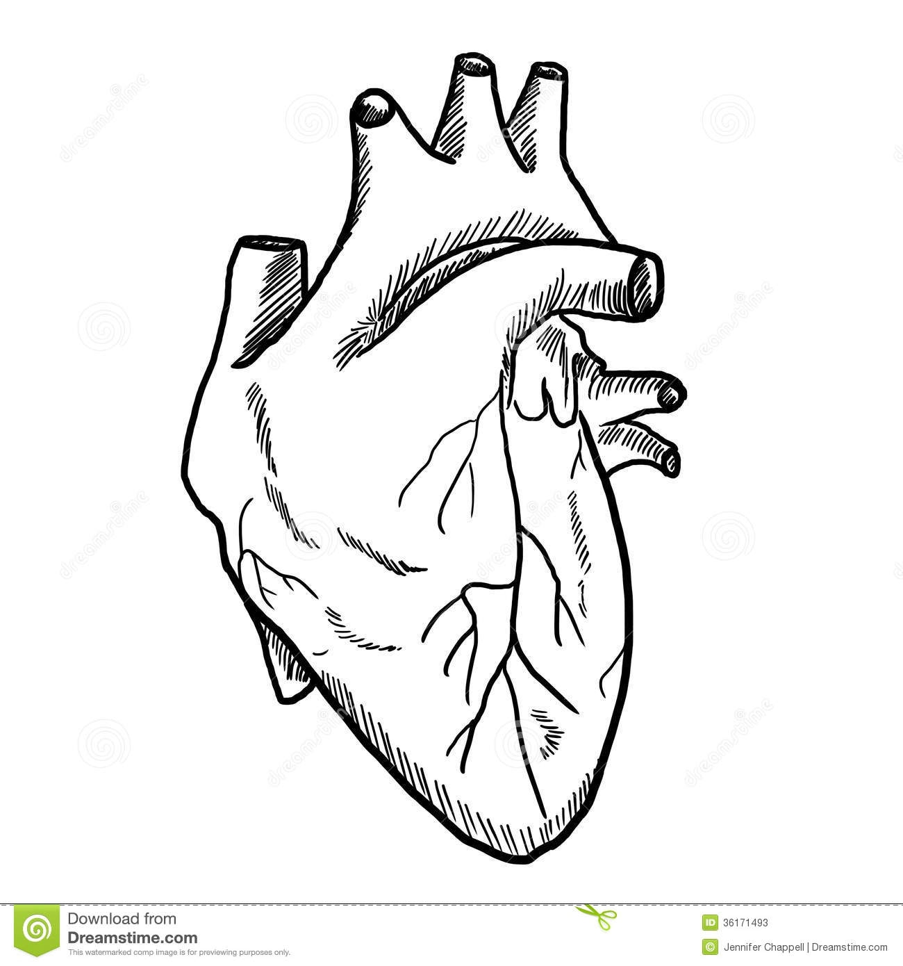 Organs clipart actual heart And Heart Black com Clipart