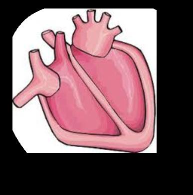 Organs clipart actual heart Art Clip My Circulatory Cliparts