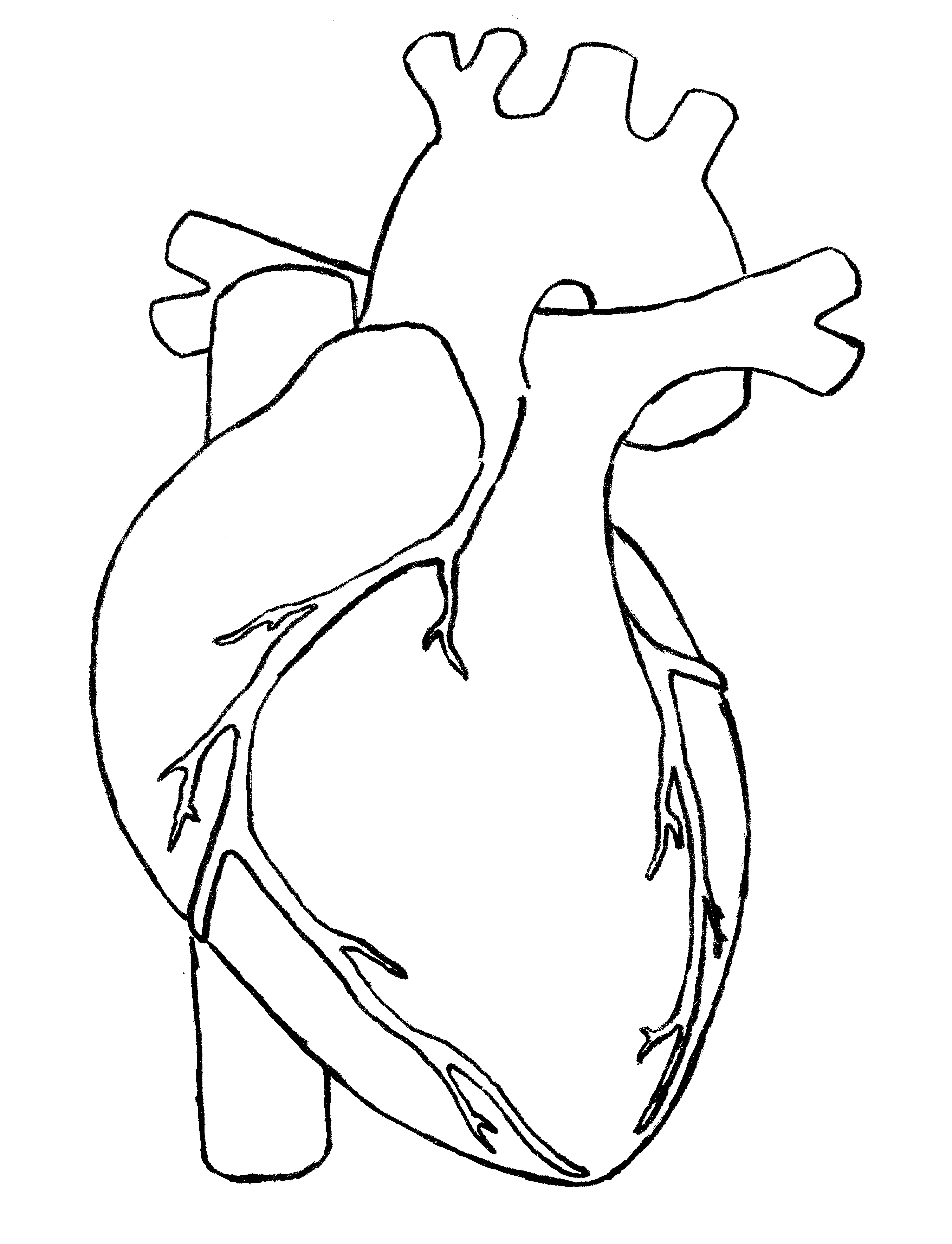 Organs clipart actual heart Human Anatomy Human Black #1700