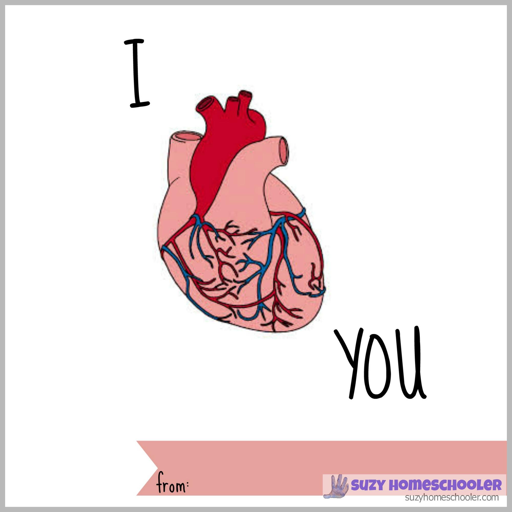 Organs clipart actual heart Human Printable Free Heart STEM