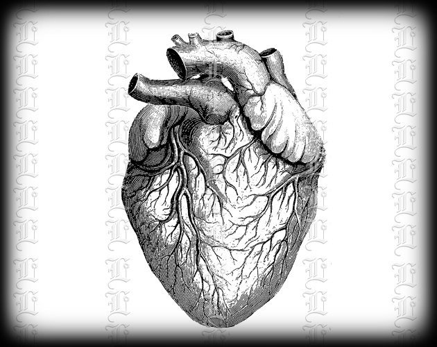 Organs clipart antique Anatomy Like Clip item? Heart