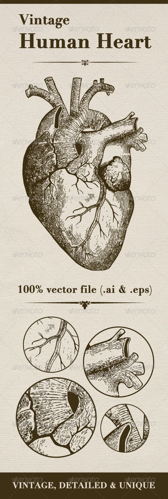 Organs clipart antique Pinterest cartoon some You Vintage