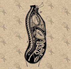 Organs clipart antique Anatomy Black clipart Backbone Retro