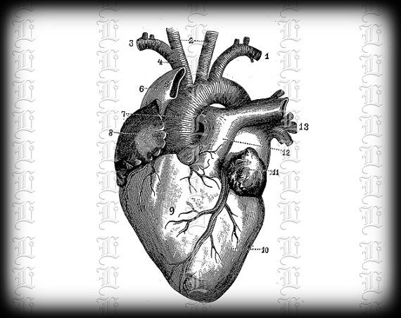 Organs clipart antique Images Resolution High and Clip
