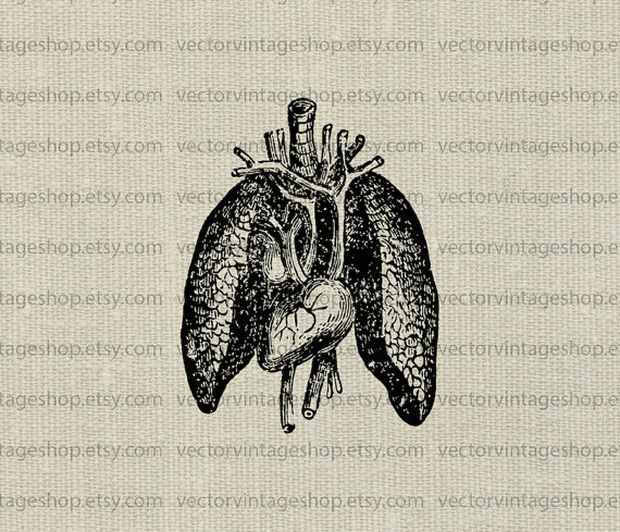 Organs clipart antique Anatomy Illustration Science Instant Human