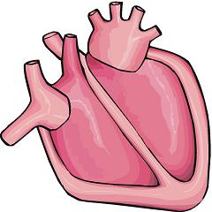 Science clipart heart #9