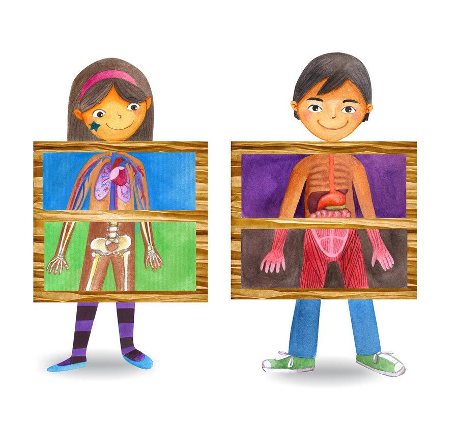 Anatomy clipart kid body On human deviantART body anatomy
