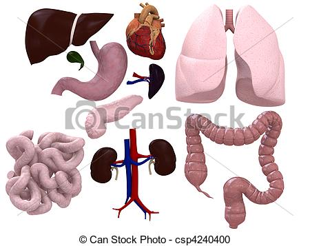 Organs clipart different  Stock organs of Stock