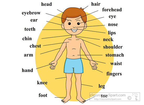 Organs clipart human kidney Body Clipart Images body%20clipart For